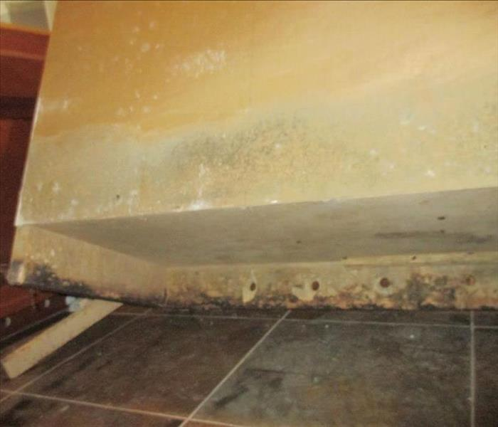 Water Damage Preventing Mold with Quick Water Mitigation